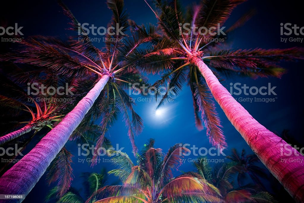 Palm Tree Illumination stock photo