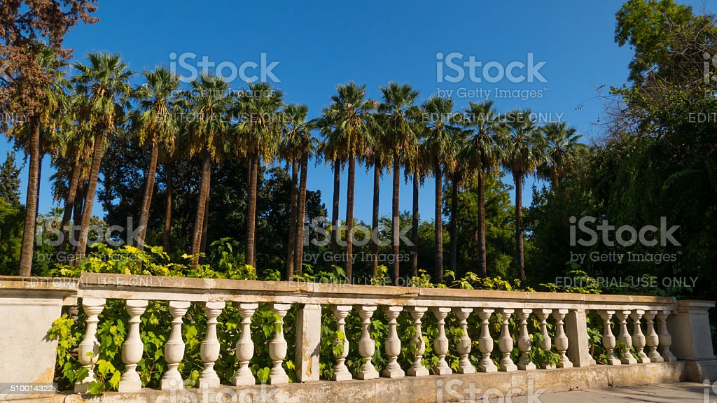 Palm tree in a row at National garden Athens, Greece stock photo