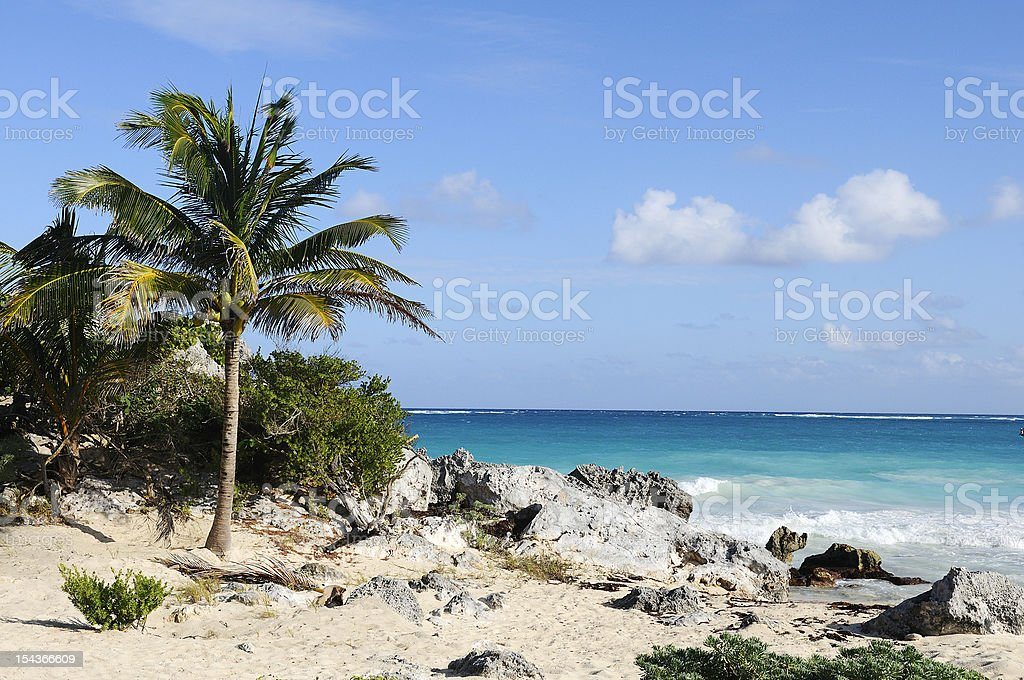 Palm tree in a tropical beach stock photo