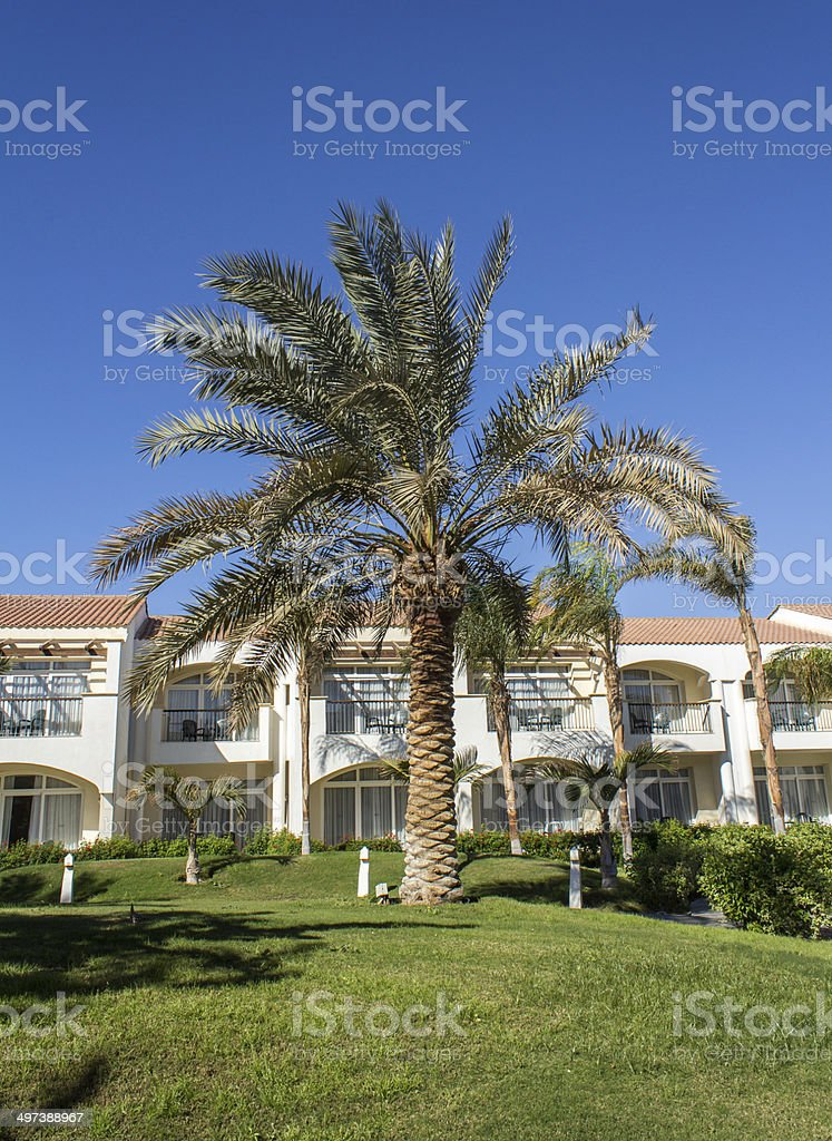 Palm tree in a tropical country stock photo