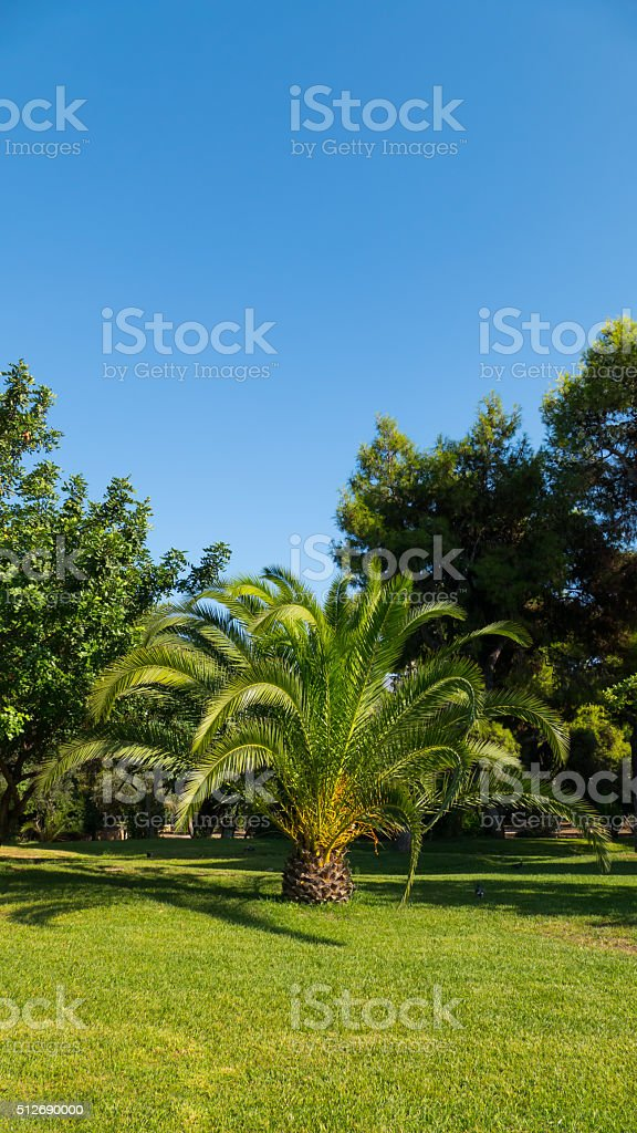 Palm tree in Athens, Greece-vertical stock photo