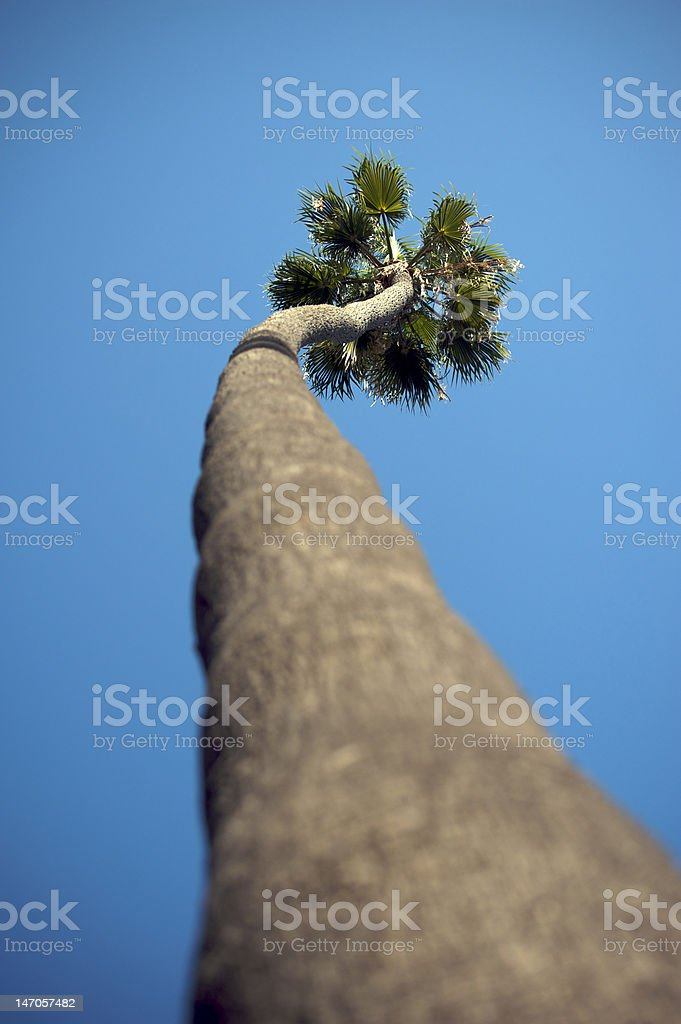 Palm tree in Beverly Hills royalty-free stock photo