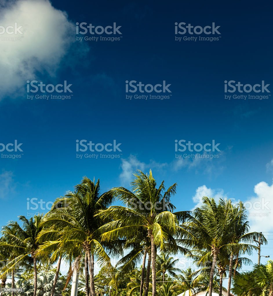 palm tree in florida stock photo