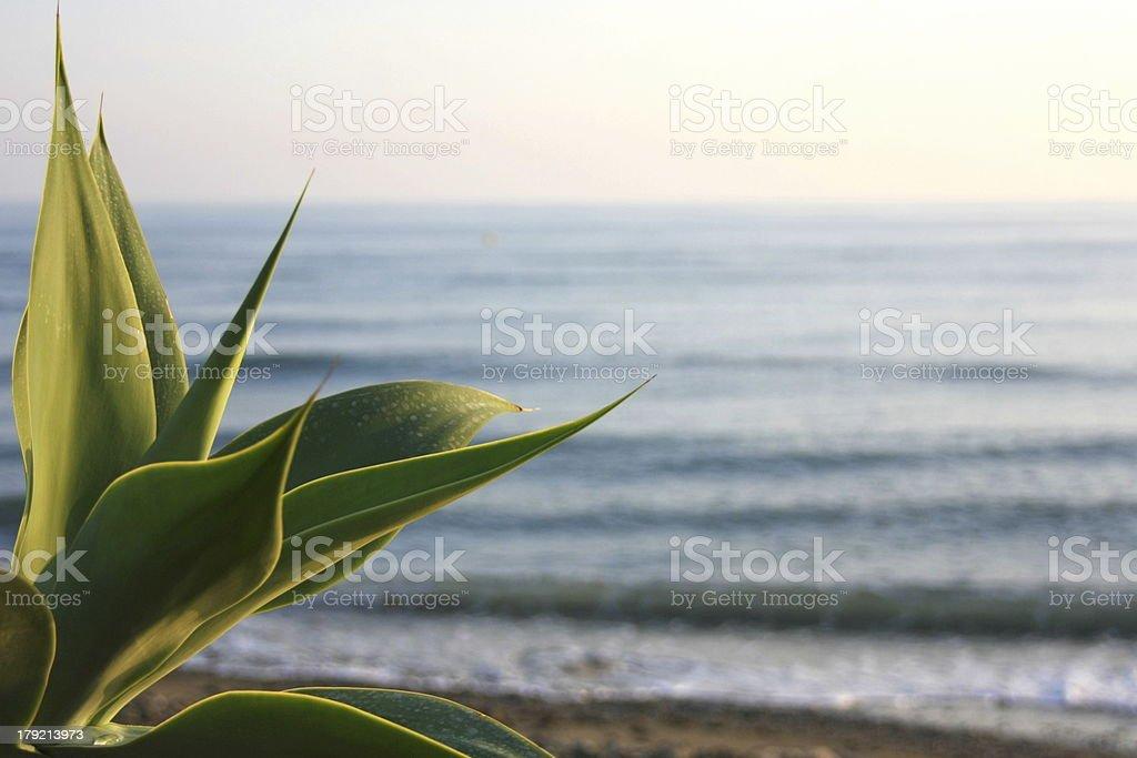 Palmeira na frente do mar Ondulado foto de stock royalty-free