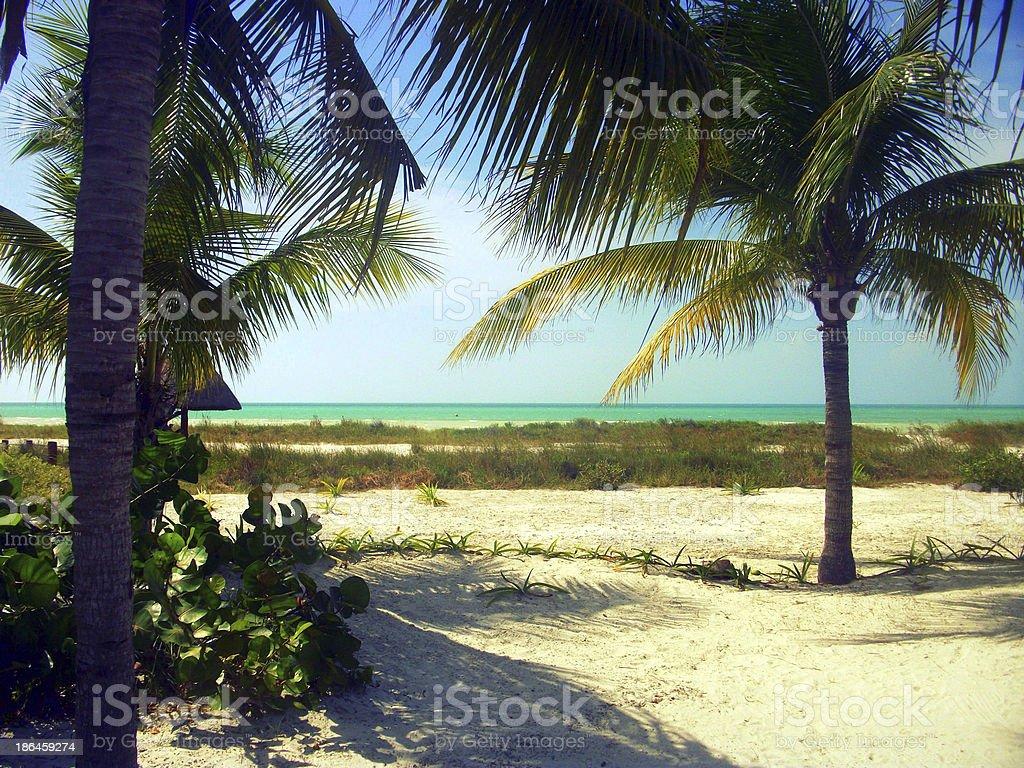 Palm Tree In Hawaii royalty-free stock photo