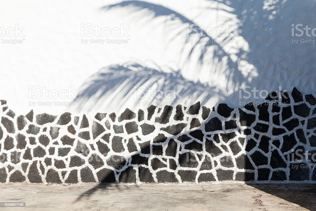 Palm tree in Lanzarote, Canary Islands, Spain stock photo