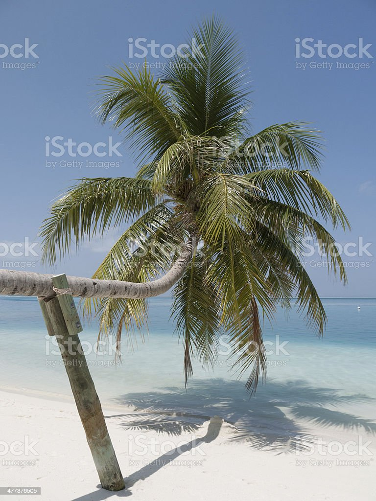 Palm Tree in Paradise royalty-free stock photo