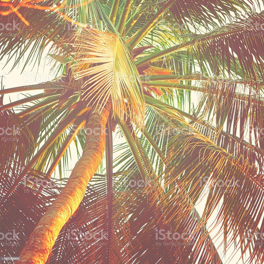 Palm tree in sunlight stock photo