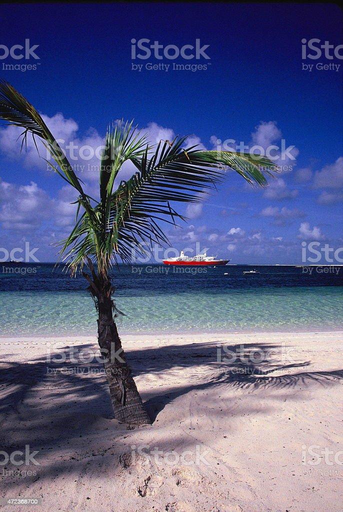 Palm tree in the bahamas stock photo