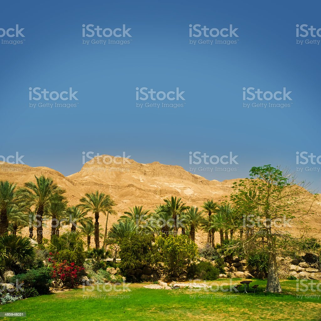 palm tree in the desert stock photo