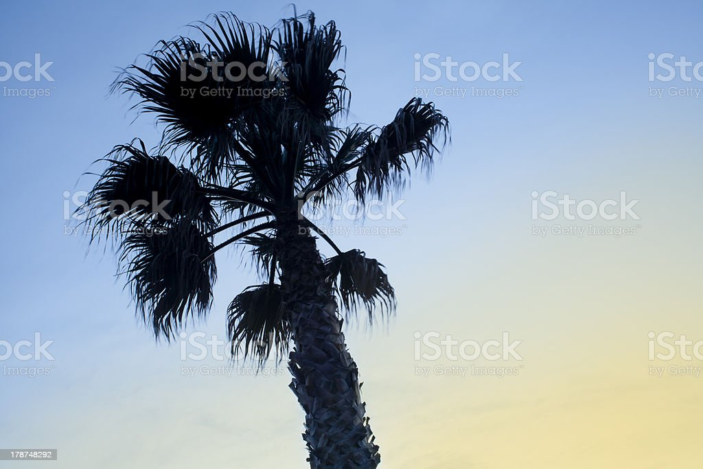 Palm tree in the wind royalty-free stock photo