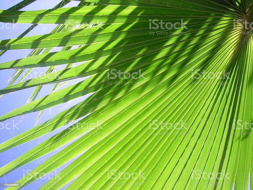 Palm Tree Leaf 2 royalty-free stock photo