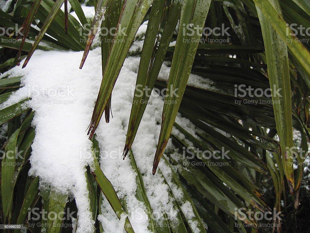 Palm Tree Leaf with Snow 3 stock photo