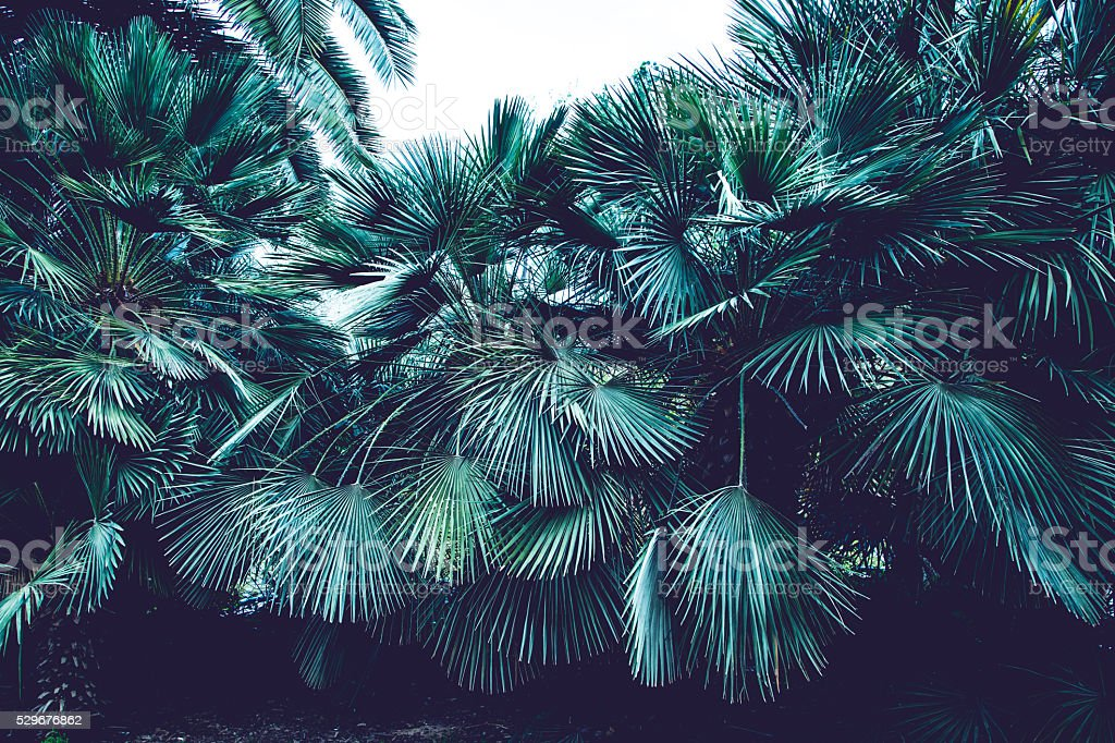 Palm tree leaves background stock photo