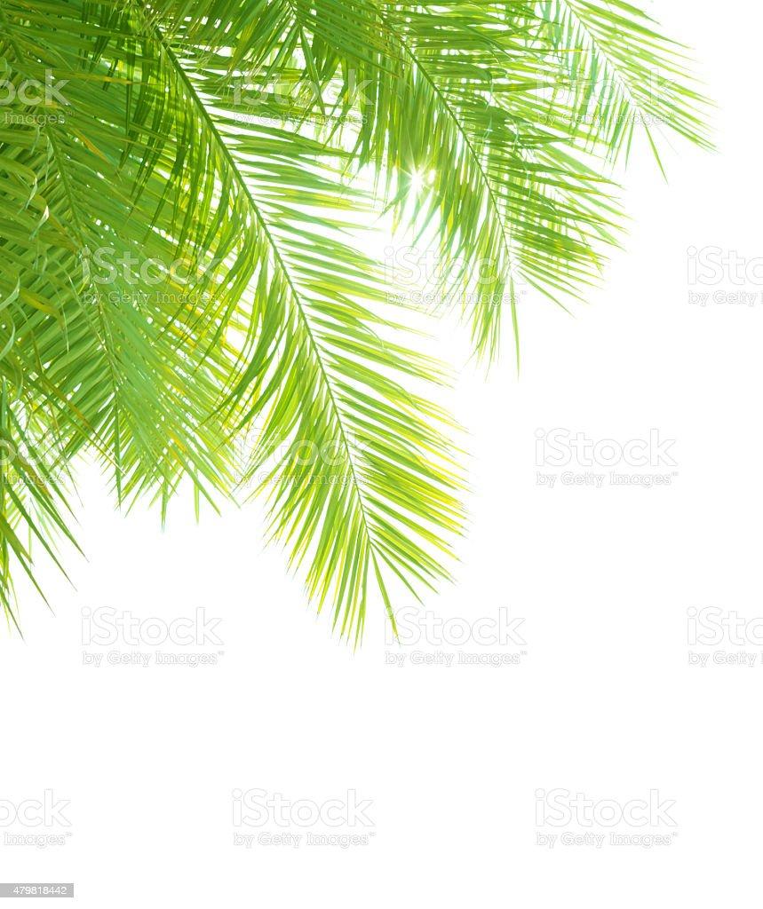 Palm tree leaves border stock photo