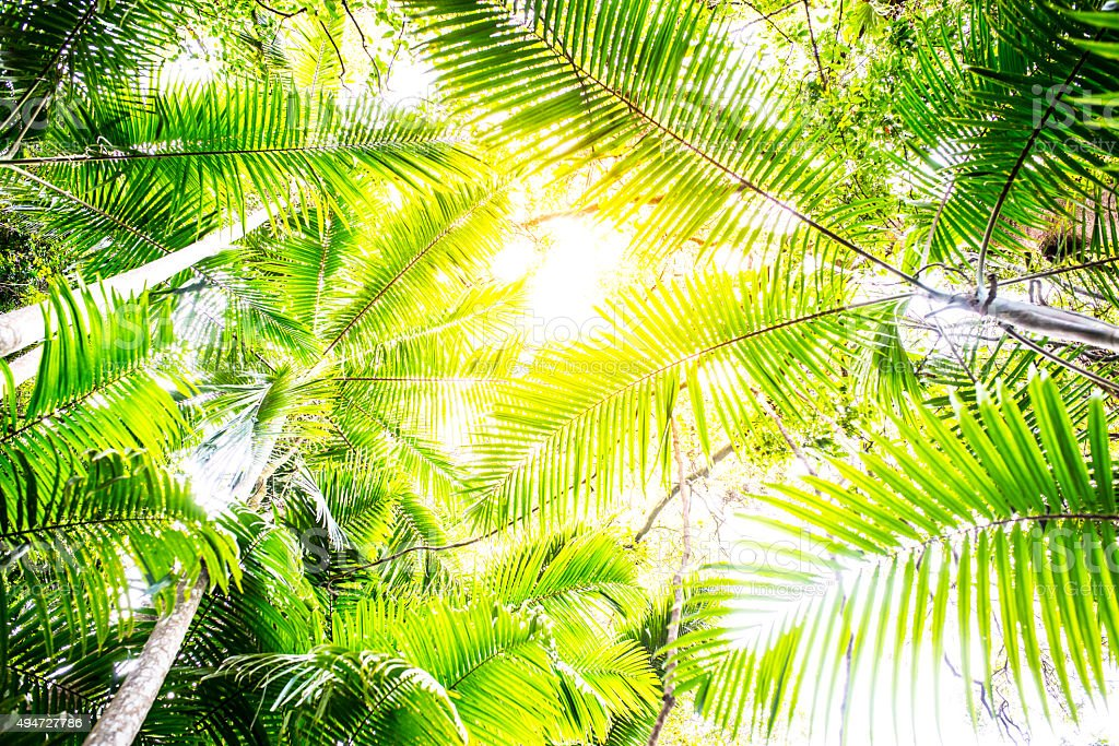 Palm Tree Leaves in Rainforest stock photo