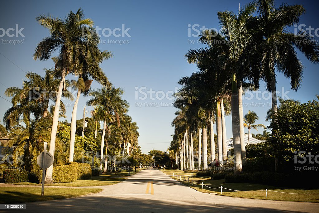 Palm tree lined street in Florida royalty-free stock photo