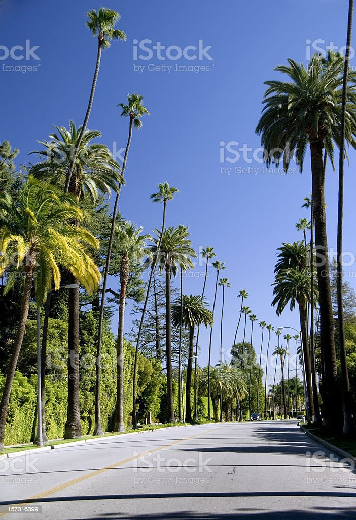 Palm tree lined street royalty-free stock photo