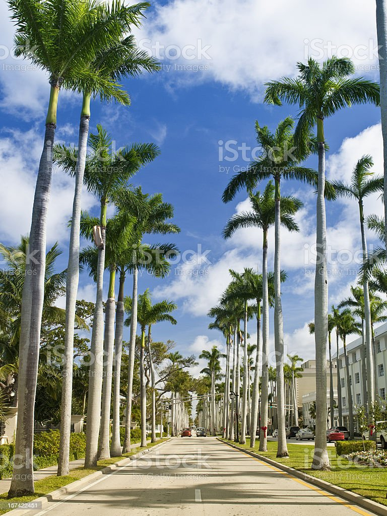 Palm tree lined street stock photo