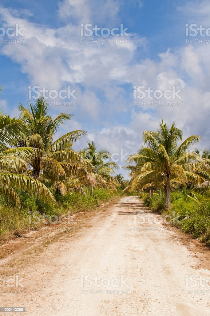 Palm Tree Lined Tropical road stock photo