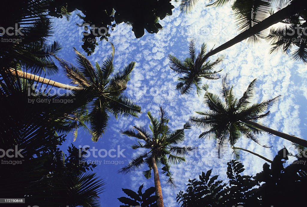 Palm Tree Magic royalty-free stock photo