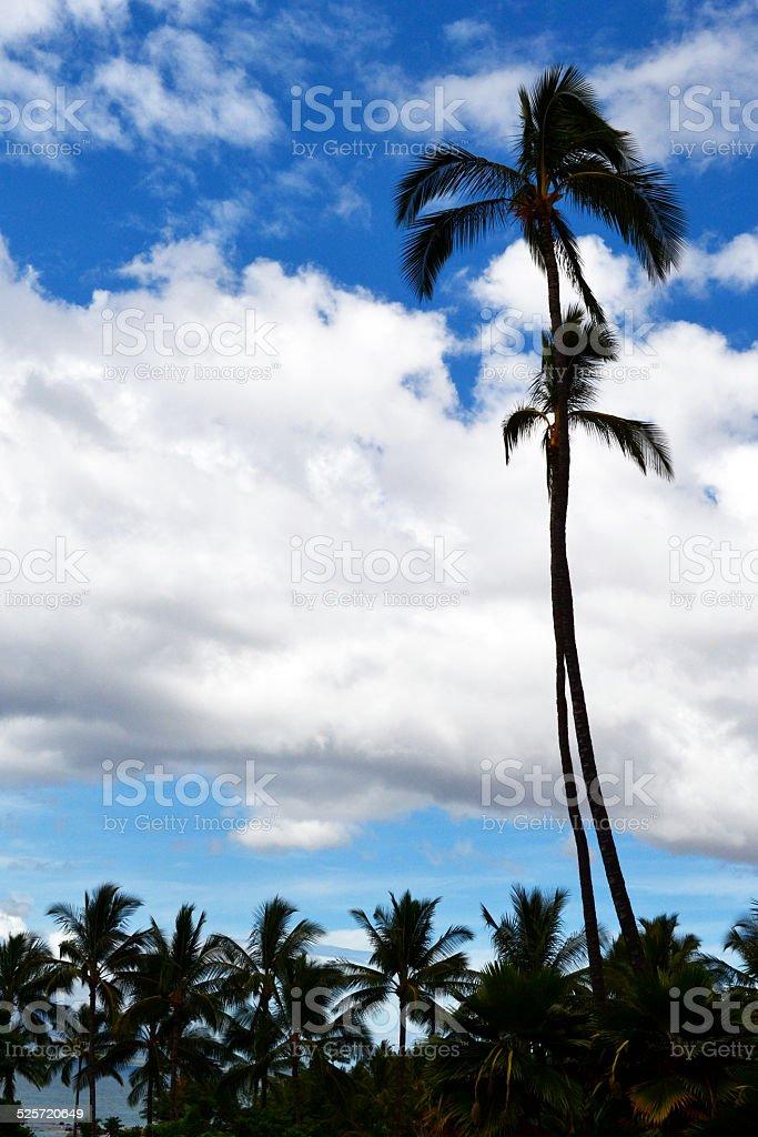 Пальмы, остров Мауи, Гавайи Стоковые фото Стоковая фотография