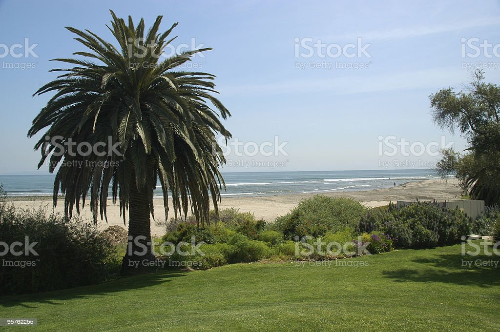 Palm Tree near the Beach stock photo