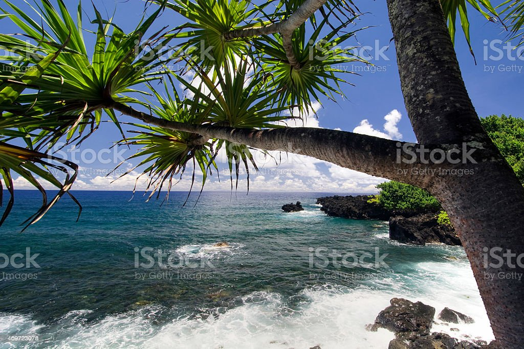 Palm tree, northern coastline,road to Hana, Maui, Hawaii stock photo