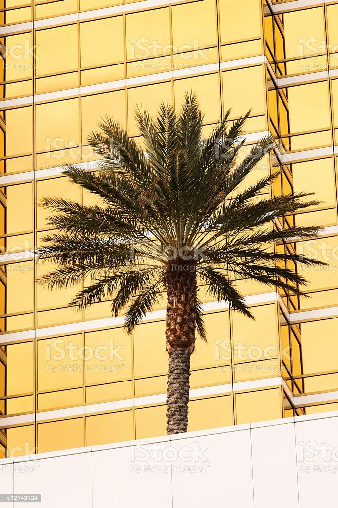 Palm Tree Office Building Window Facade stock photo
