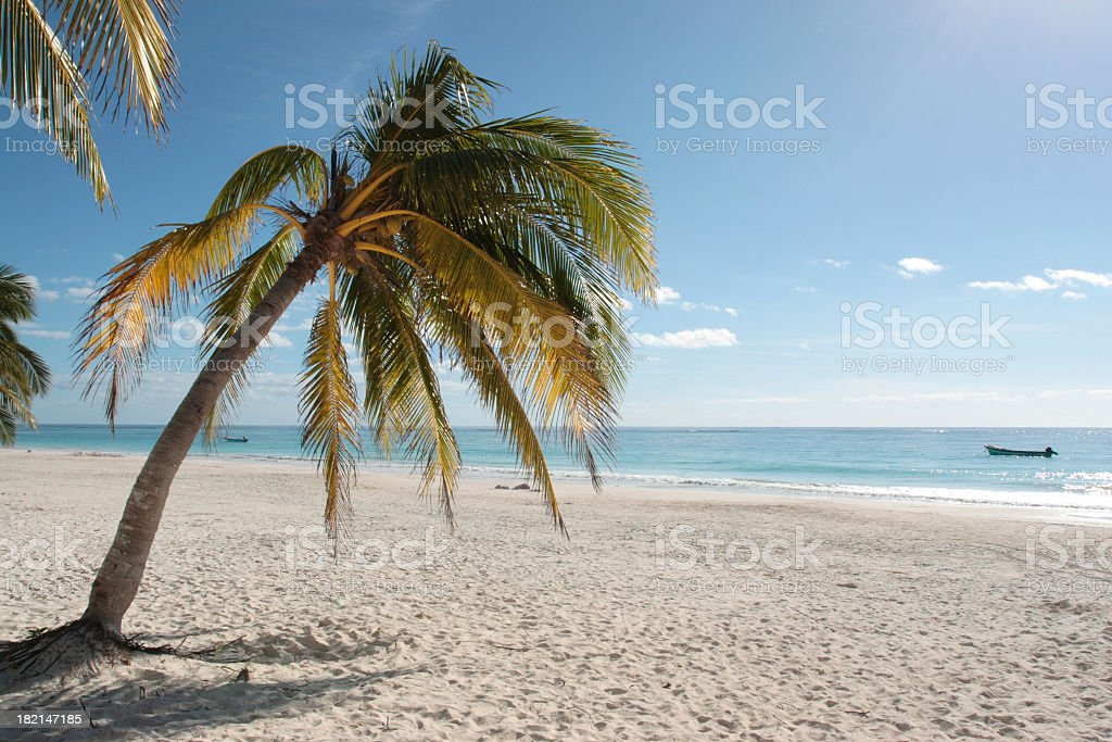 Palm tree on a beach in the Caribbean royalty-free stock photo