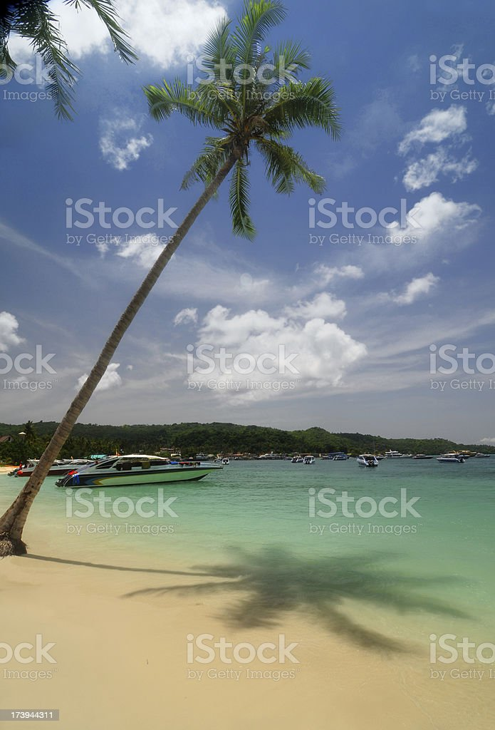 Palm Tree on a Tropical Beach royalty-free stock photo