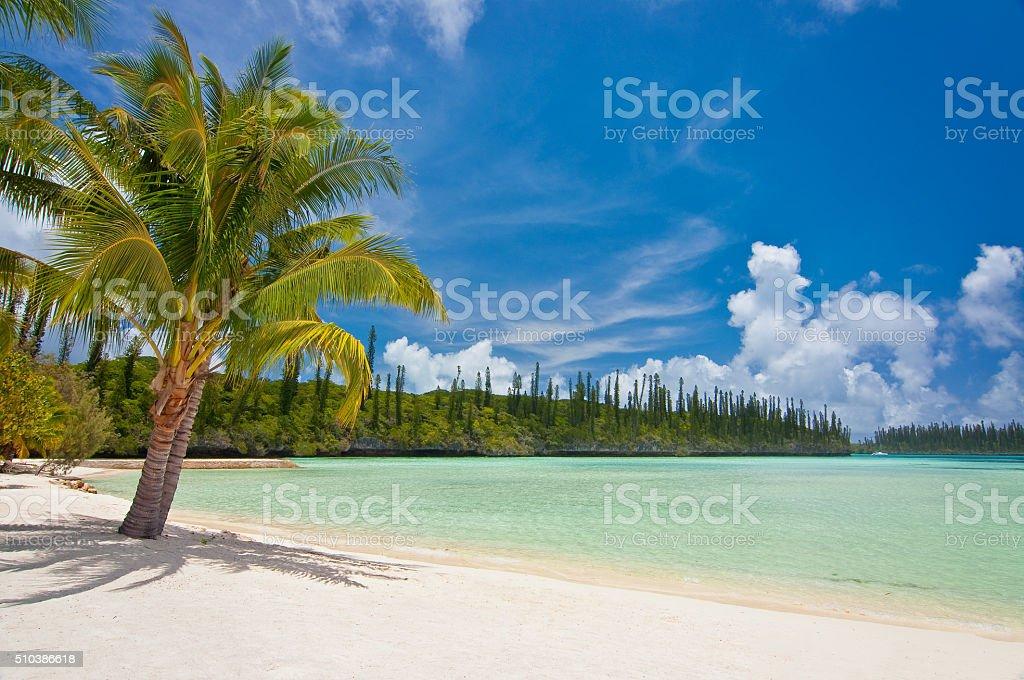 Palm tree on a tropical beach stock photo