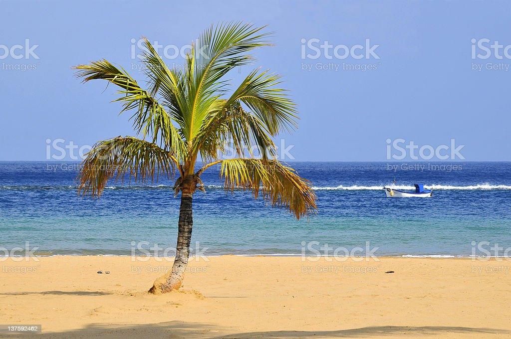 Palm tree on beach at Tenerife stock photo