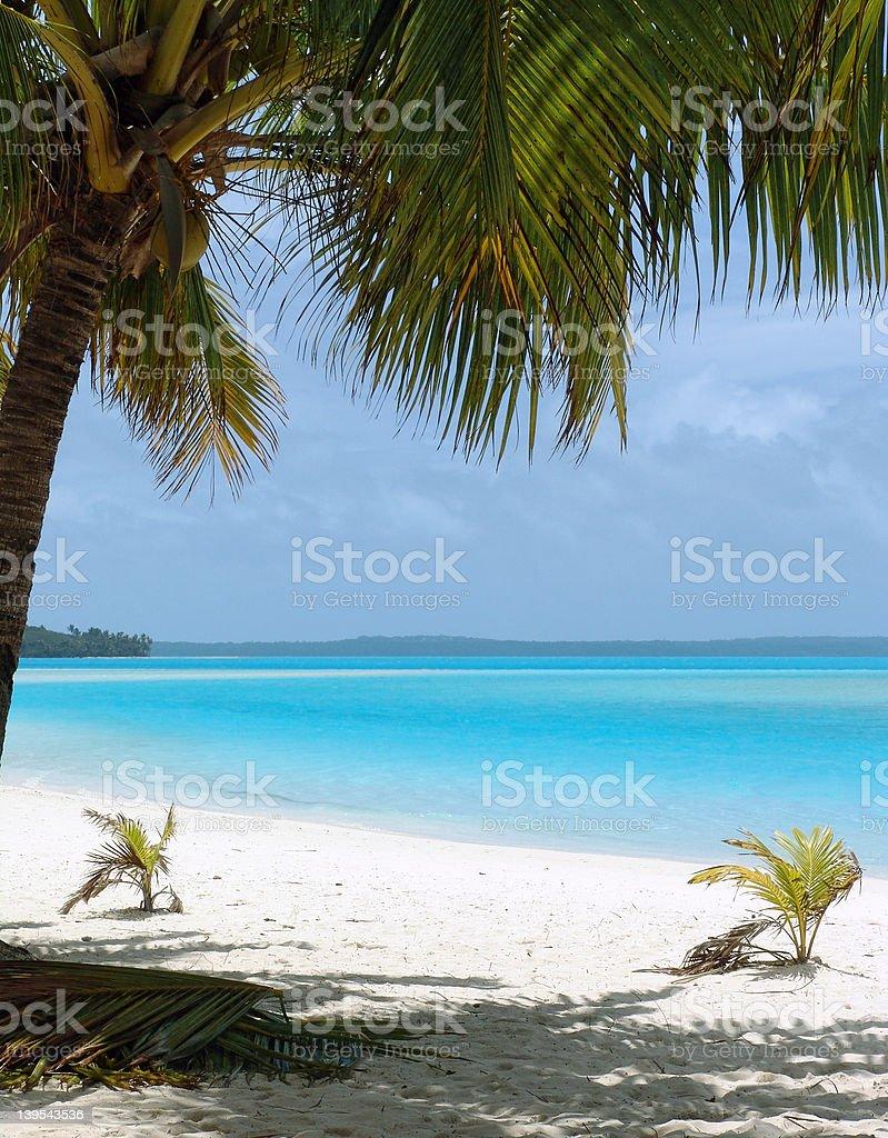 Palm Tree on Beach royalty-free stock photo