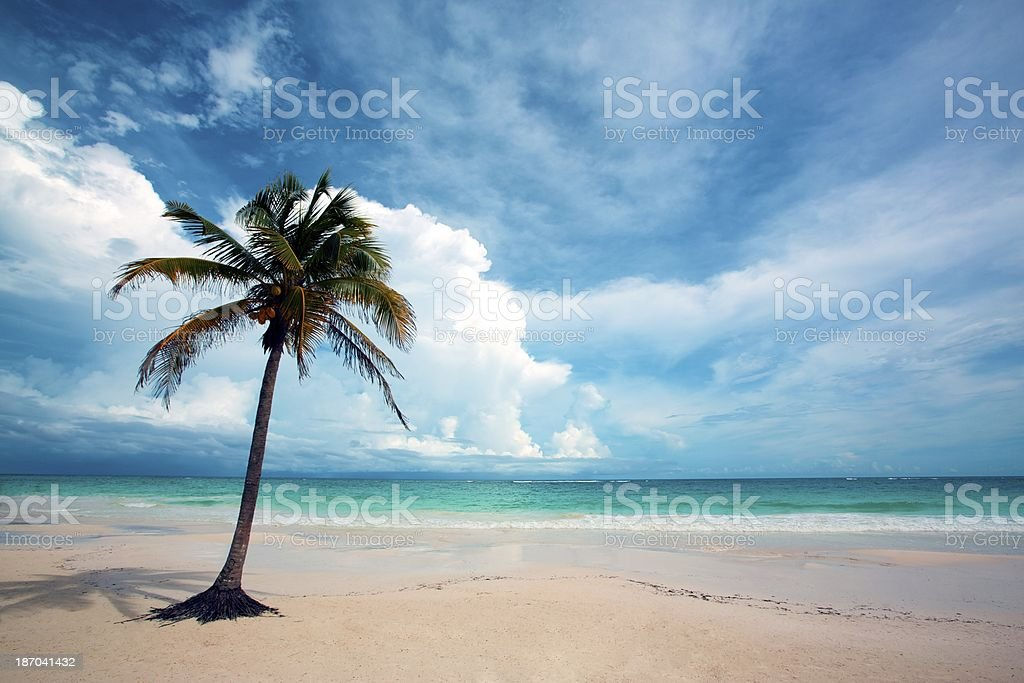 Palm Tree on Beach royalty-free stock photo