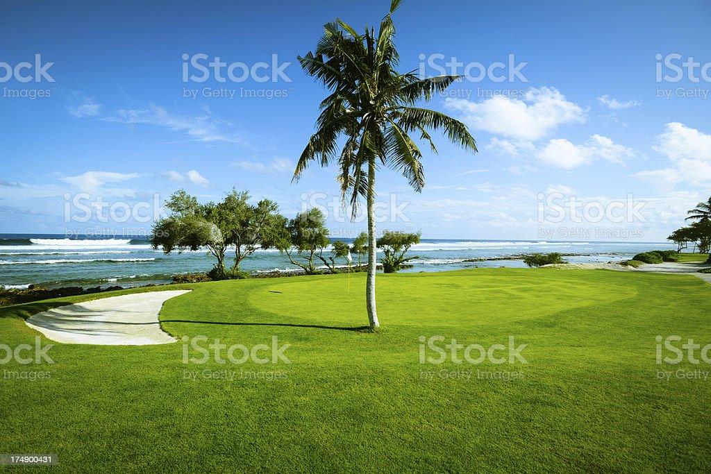 Palm Tree On Beautiful Seaside Golf Course stock photo