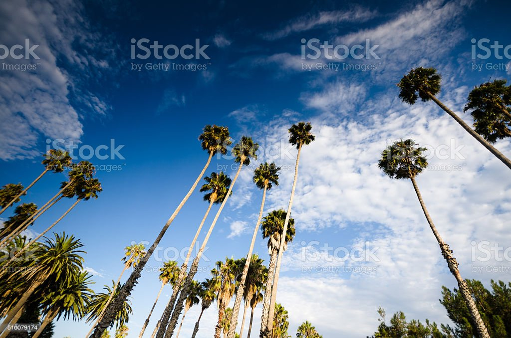 Palm tree on Beverly Hills, California - USA stock photo