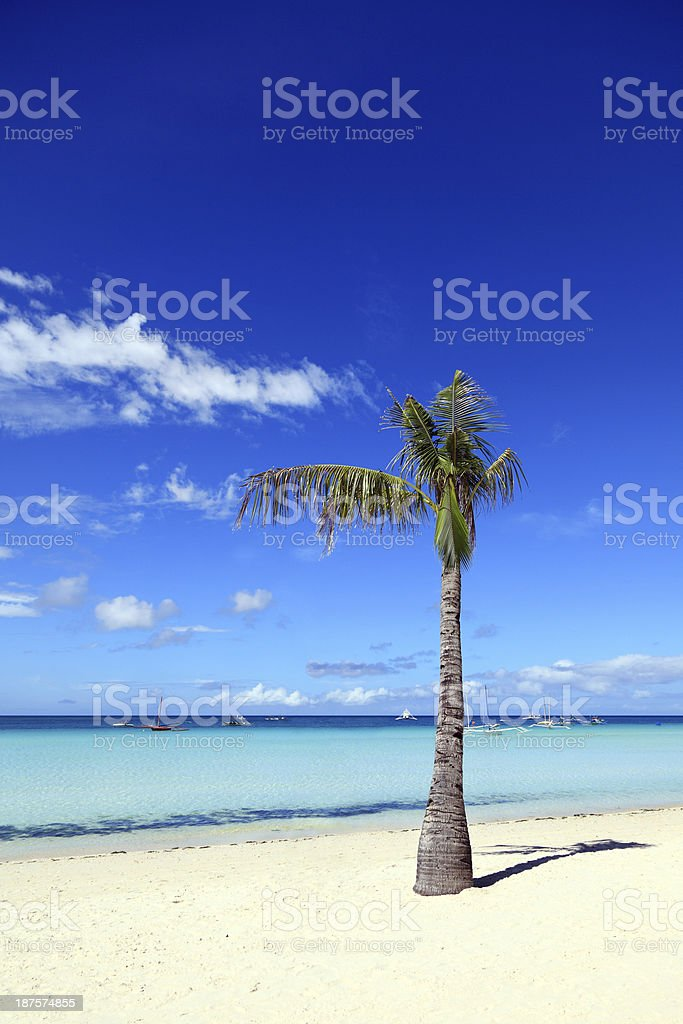Palm tree on exotic beach royalty-free stock photo