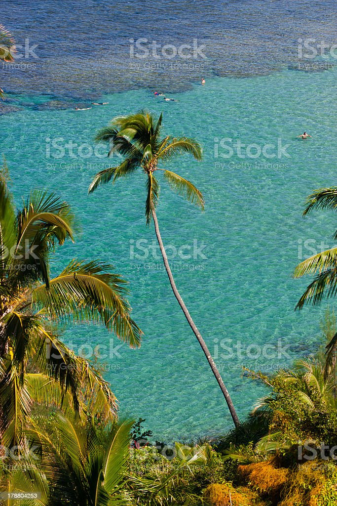 Palm Tree on Kauai, Hawaii royalty-free stock photo