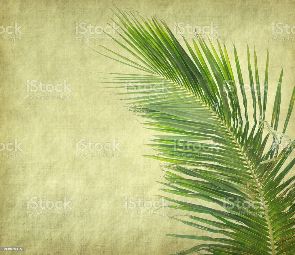 palm tree  on old paper background stock photo