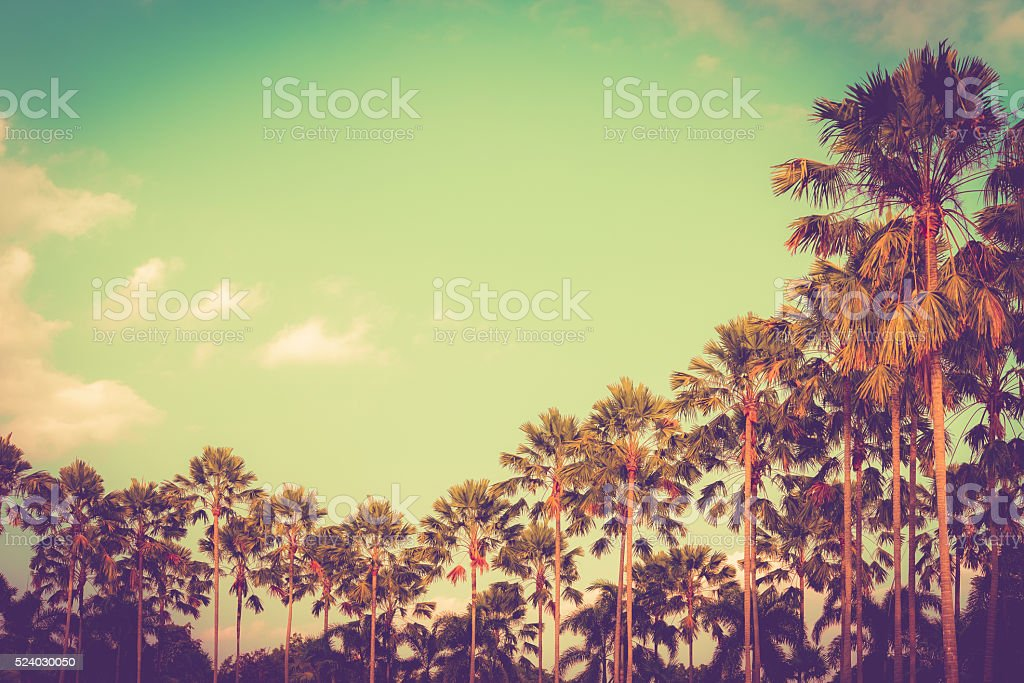 Palm tree on sky background vintage color stock photo
