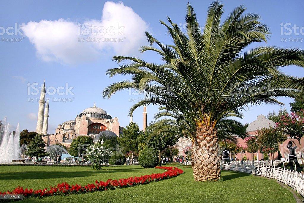 Palm tree on Sultanahmet garden royalty-free stock photo