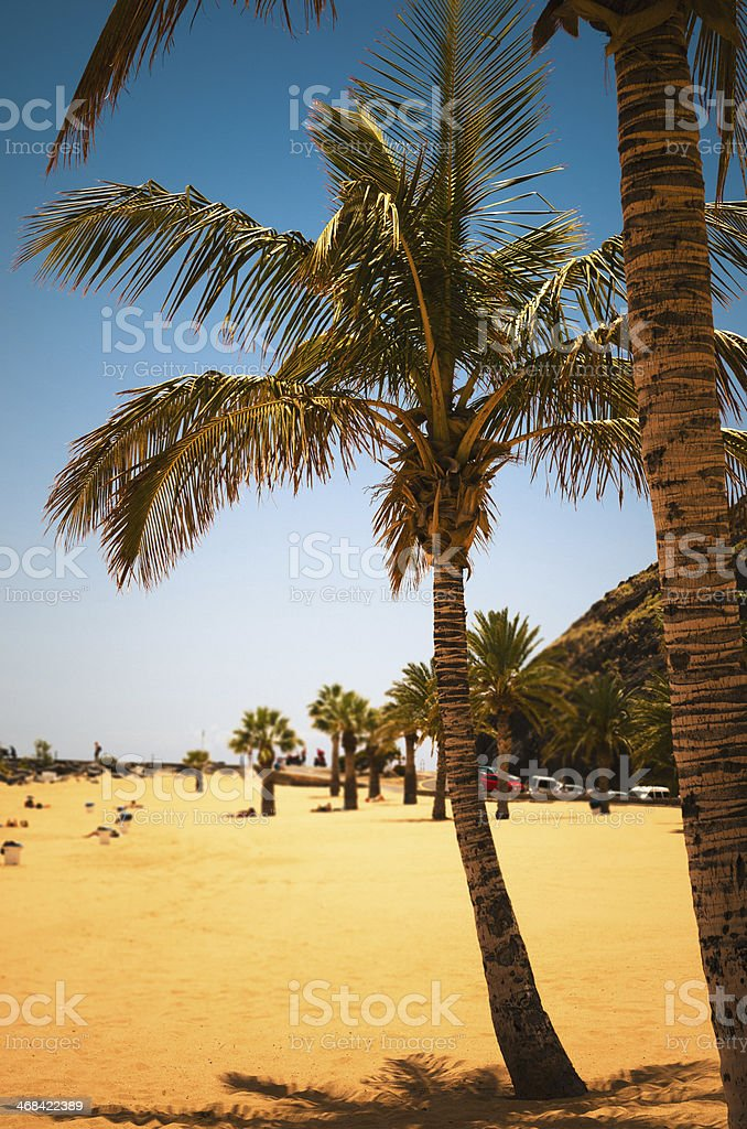 palm tree on the beach of Tenerife royalty-free stock photo