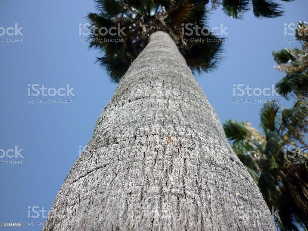 Palma árbol en el orilla del mar, una playa de arena foto de stock libre de derechos