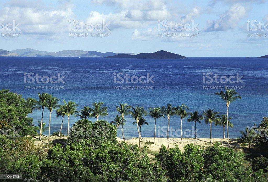 palm tree on tropical beach royalty-free stock photo