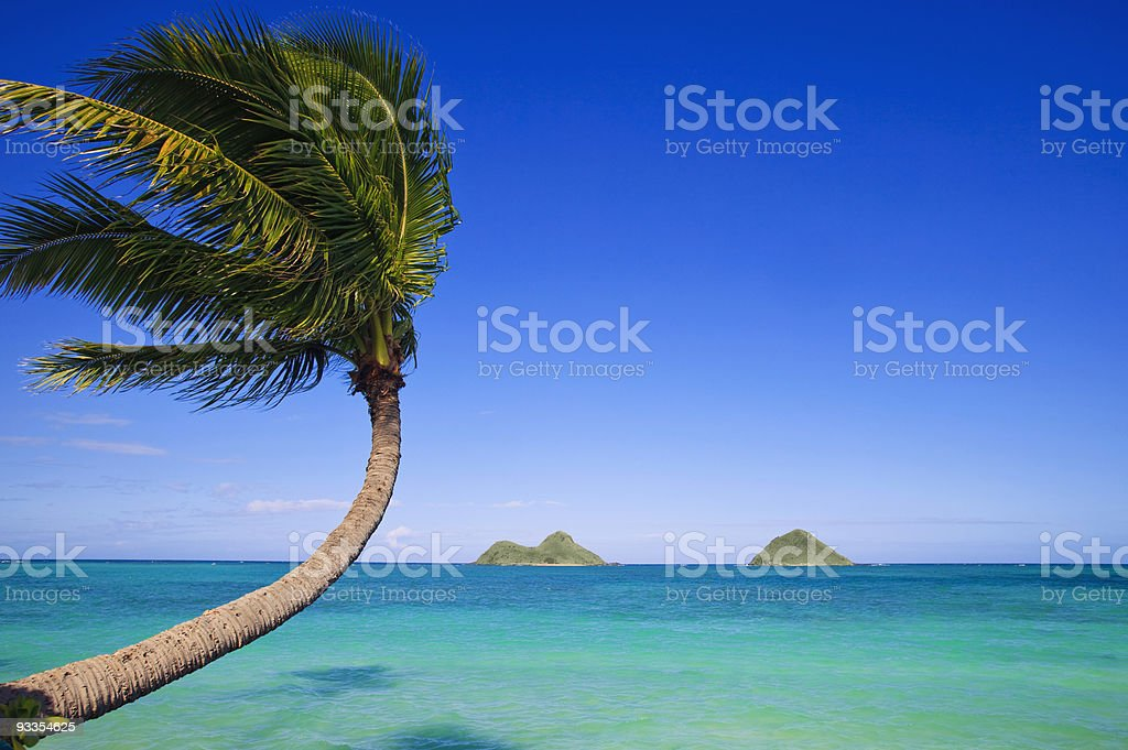 palm tree over the ocean stock photo