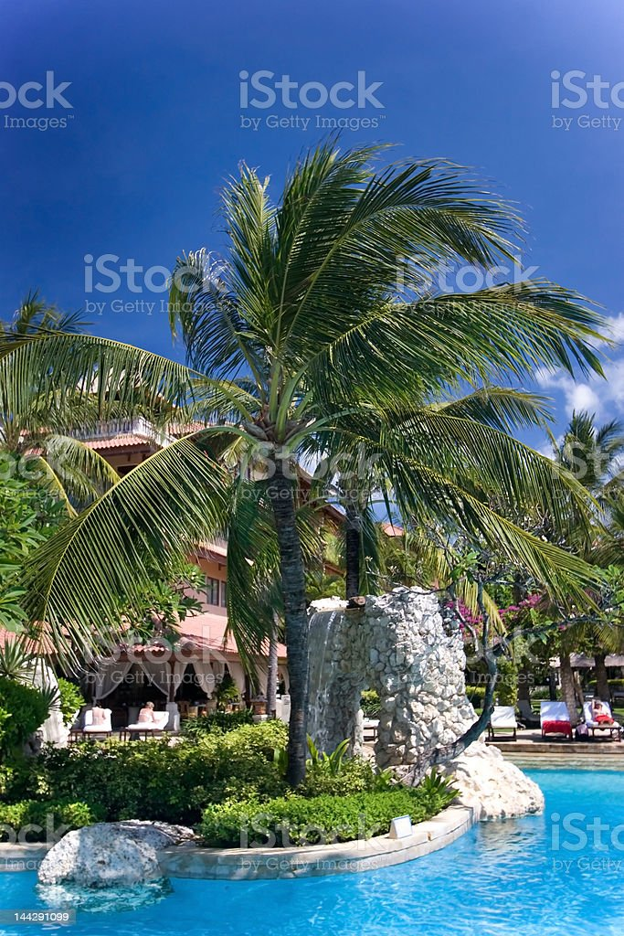 Palm tree over the swimming pool royalty-free stock photo