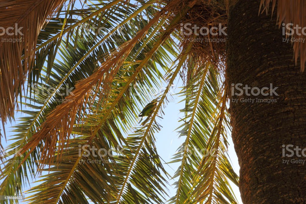 Palm tree parasol with parrot under an amazing blue sky stock photo