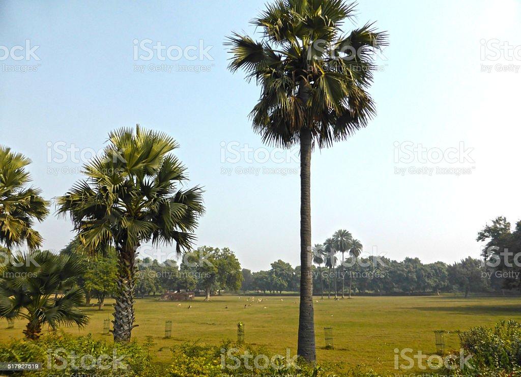 Palm Tree Park royalty-free stock photo