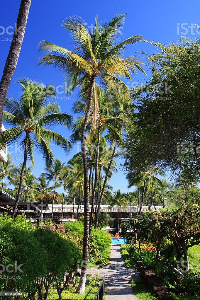 Palm tree path to Maui Hawaii resort swimming pool royalty-free stock photo